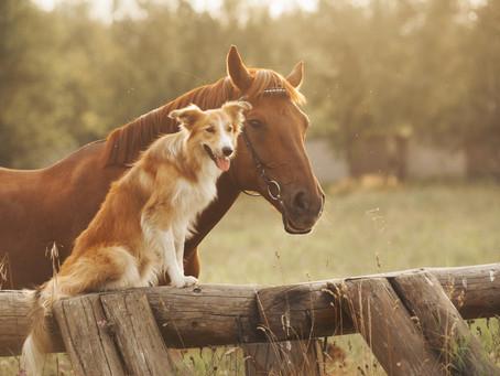 Animal Health Division