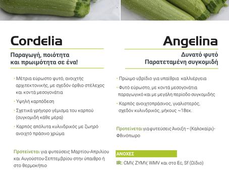 Κολοκύθι Cordelia F1 & Angelina F1