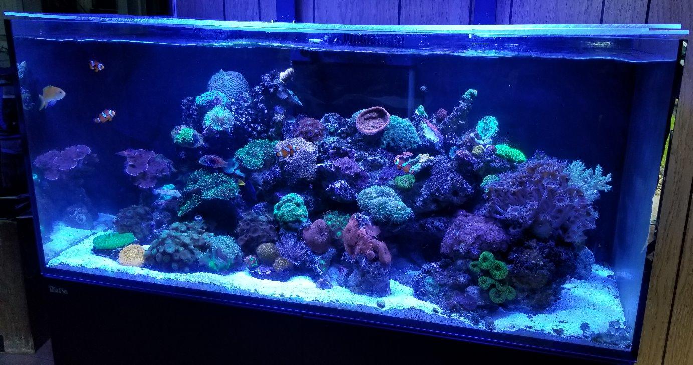Professional Aquarium Maintenance | SoFLO Aquariums