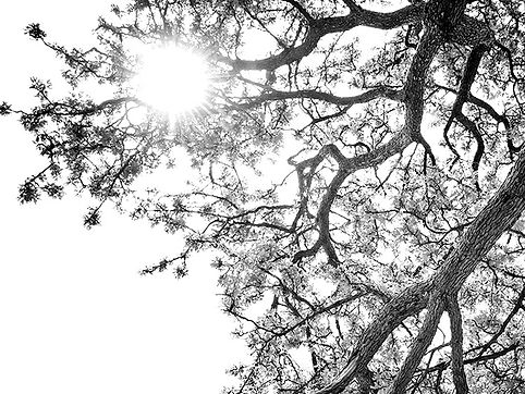 an image of sunshine through tree branches
