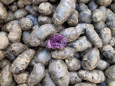 potato_purpleperuvian_IMG_0145.jpg