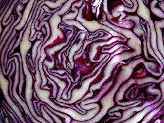 purple cabbage.jpeg