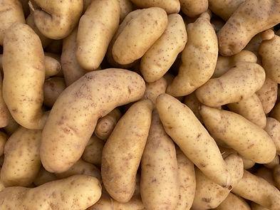 potato_laratte_IMG_0130.jpg