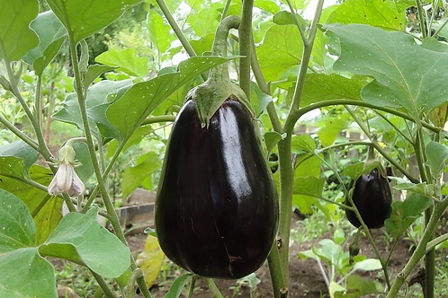 Eggplant Mix