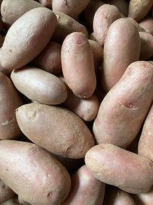 potato_roseval_IMG_0453.jpg