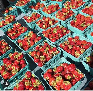 strawberries_tristar.JPEG