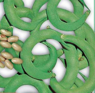 anelino beans_IMG_84C19B44508A-1.JPEG