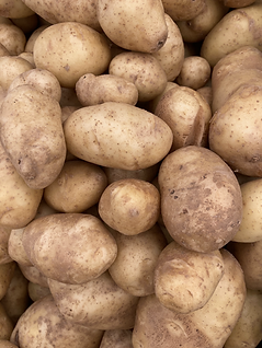potato_kennebec.heic