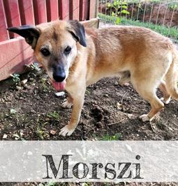 Morszi V_edited.png
