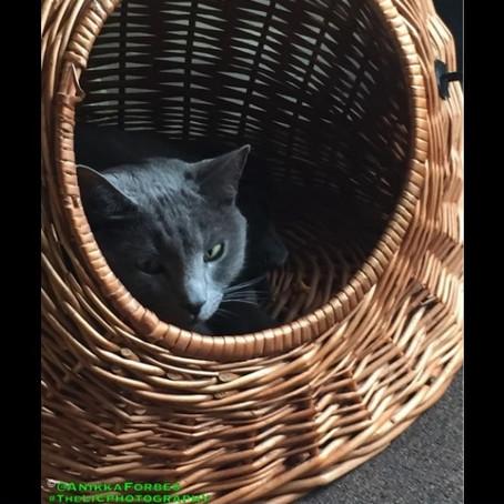 GURU SHOTS | A CATS TALE