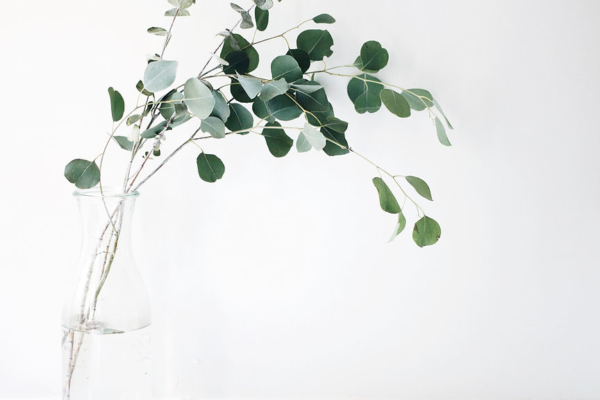 Plant banner.jpeg