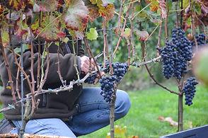 bart-wijngoed-reyngaard-20151018-135-304
