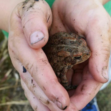 The World is Big and Small: Lessons from Beasties in Raintree School's Forest