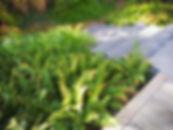 001 ogrod w cieniu.jpg