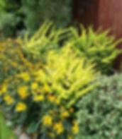 ogrod berberis rudbekia pinus rhododendr