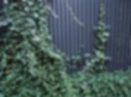 004 ogrod w cieniu.jpg