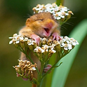 souris.PNG