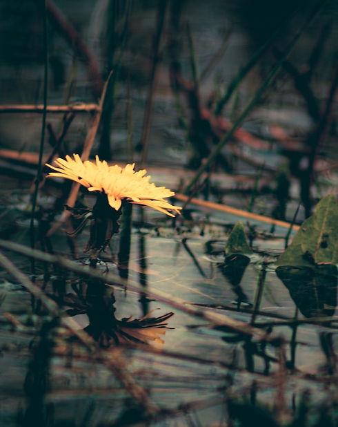 flower in water_edited.jpg