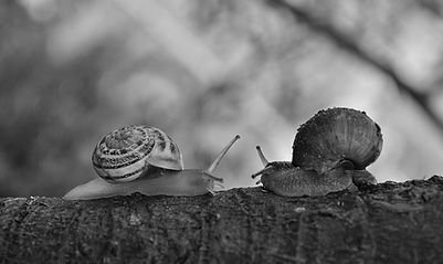animals-branch-gastropod-183333.jpg