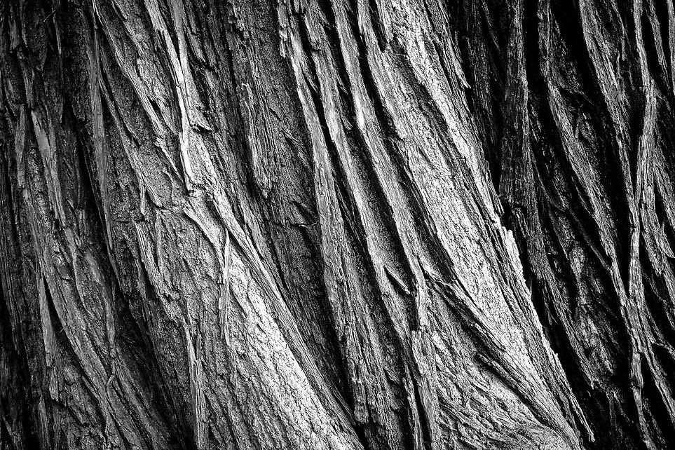 tree-2106115_1920.jpg