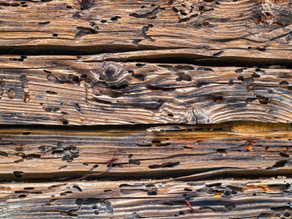 Drywood Termite VS Subterranean Termite: Everything You Need To Know