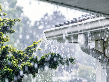 Tips to Prep Up Your Home Against Flying Termites After Rain