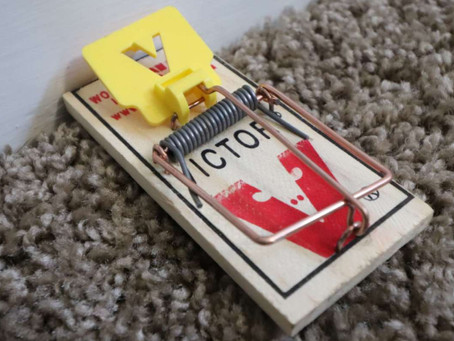 """Why Is My Mouse Trap Not Working?"" 7 Reasons Why"