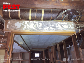 Termite Damage Vs. Water Damage: Homeowner's Guide To Knowing the Difference