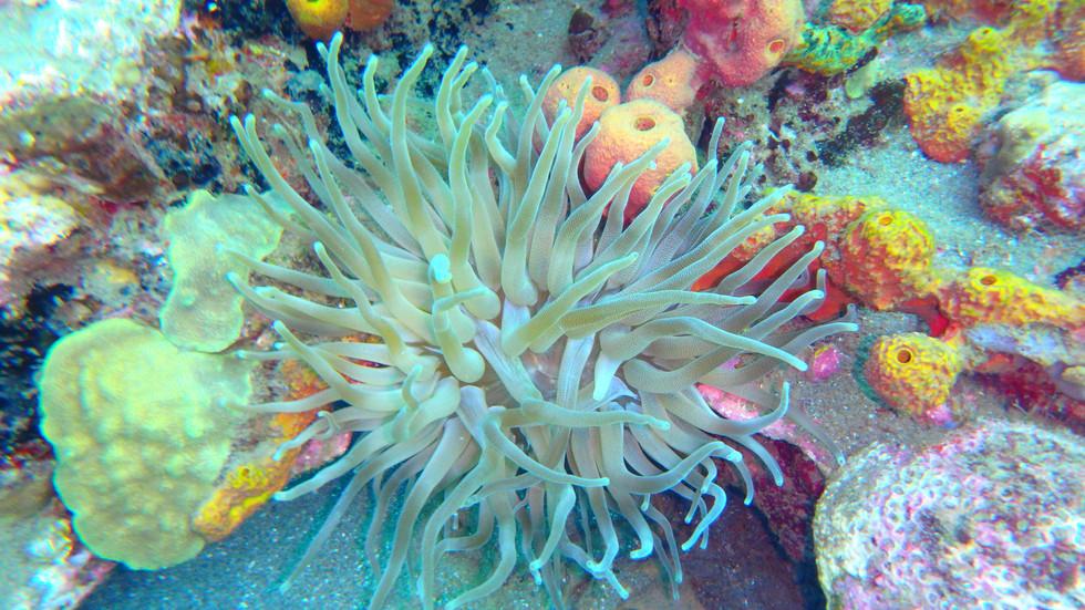 Snorkeling, fond marin, le Carbet, Martinique, Croisiere catamaran Martinique