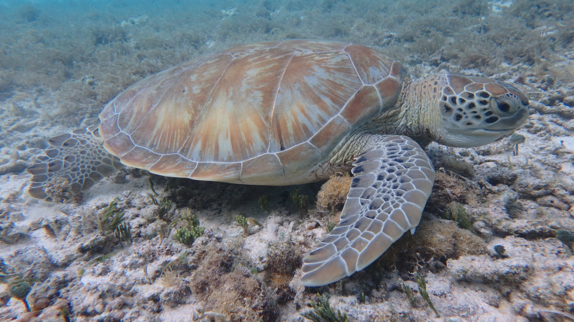 Tortue marine, Guadeloupe, Croisiere guadeloupe