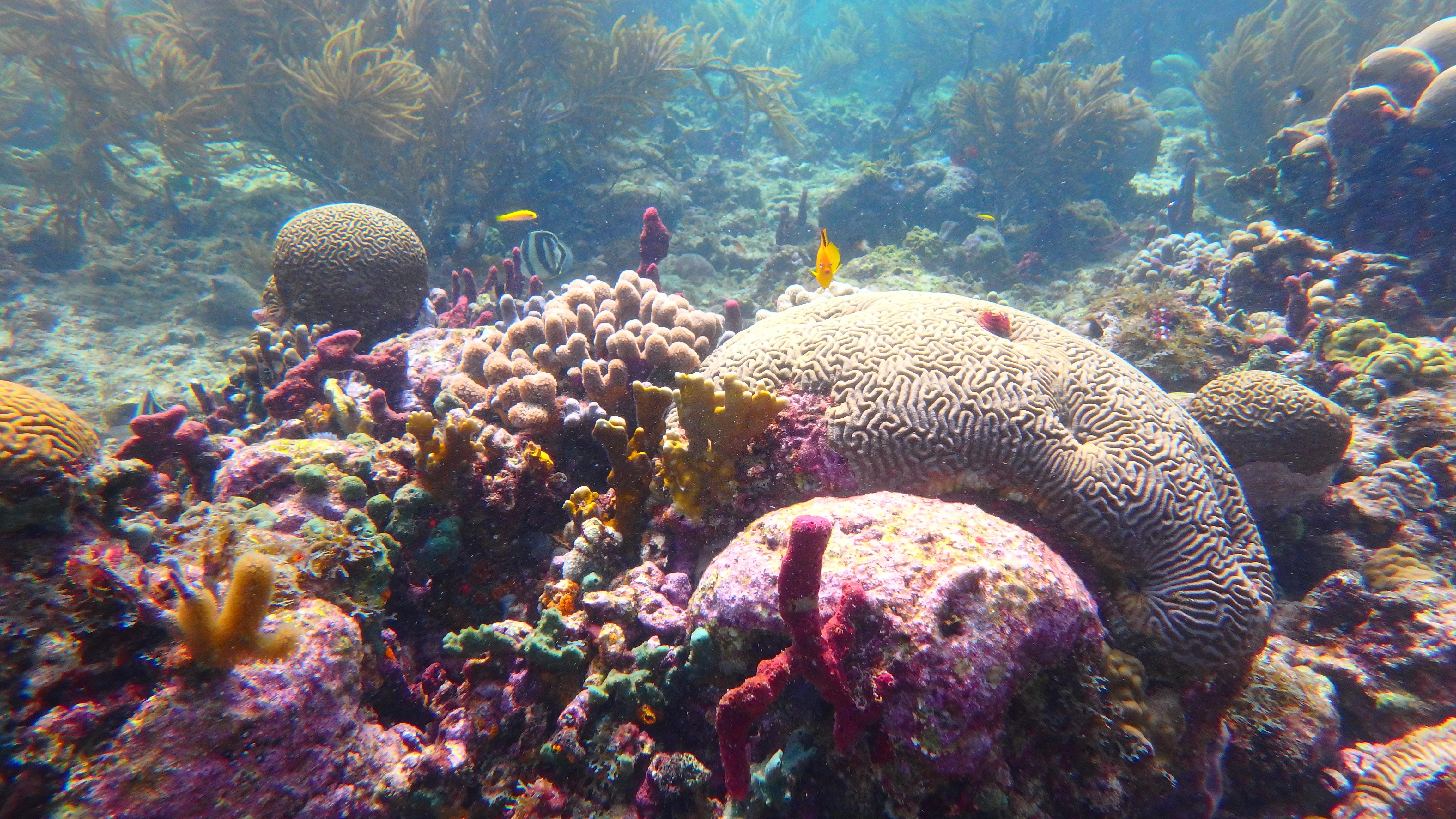 plongée corail, croisiere plongée