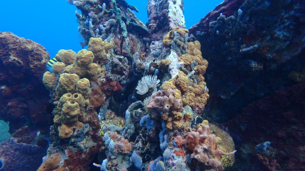 épave sous marine, snorkeling, Le Carbet, Martinique.
