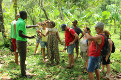 Belmont estate, croisiere Grenadines