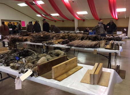 2017 Fur Auction Highlights