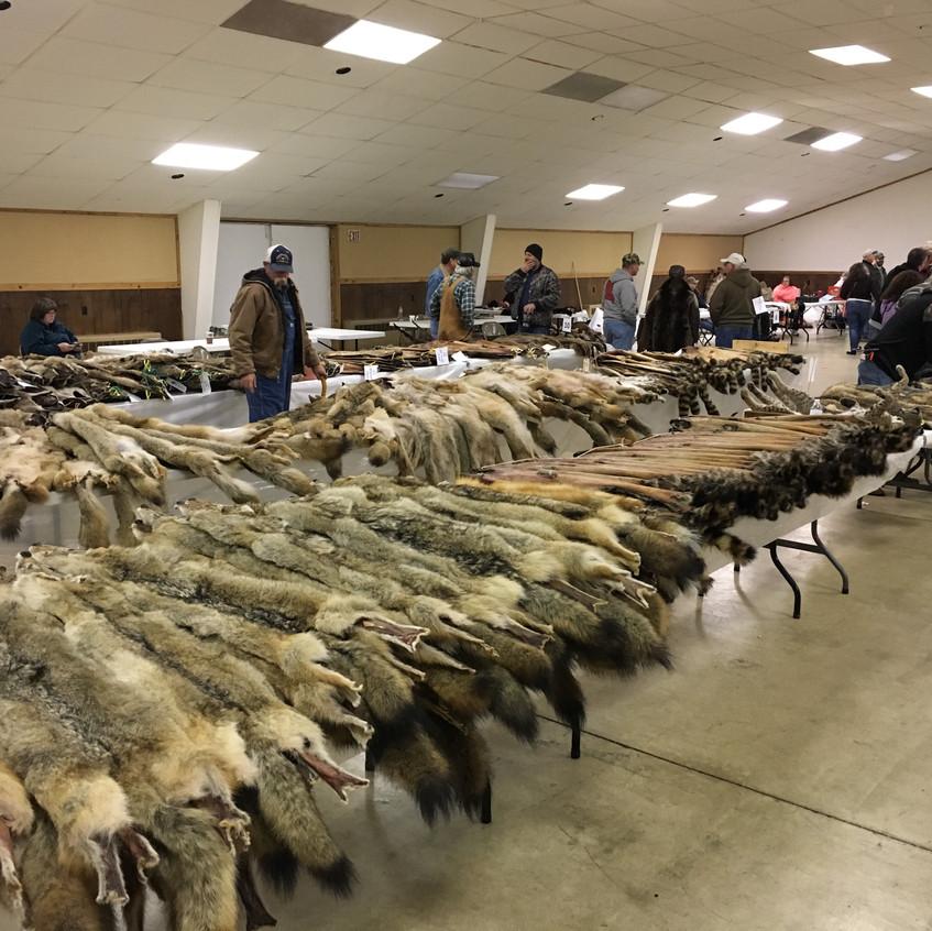 Fur Auction 2018-8