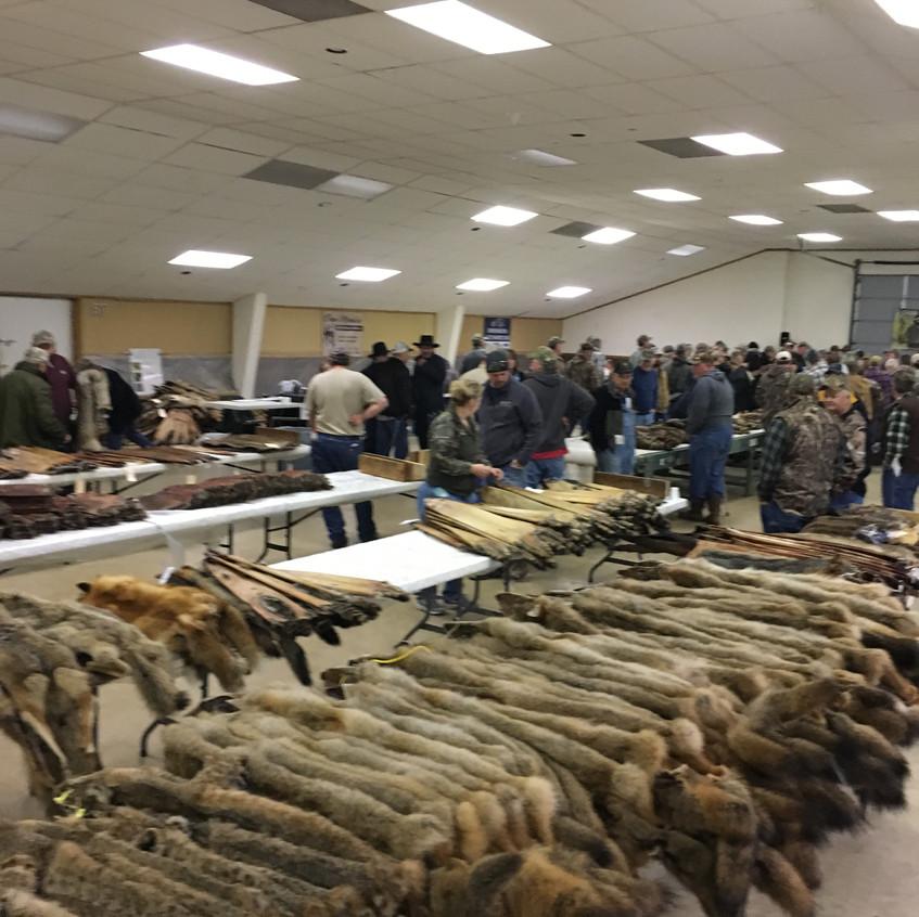 fur auction 2019-12