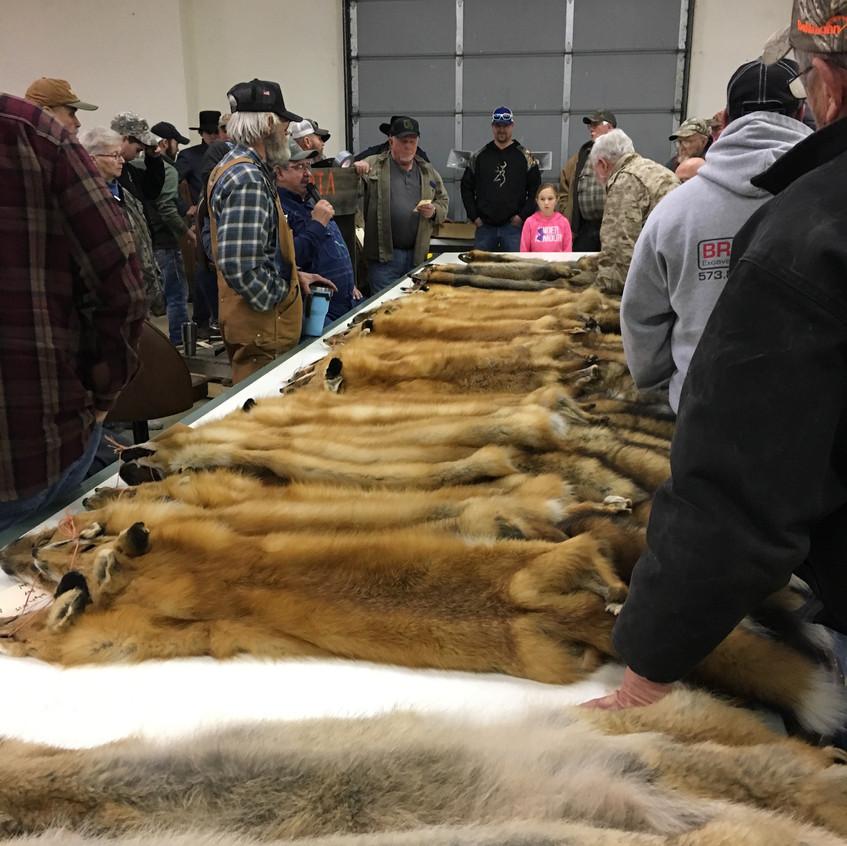 Fur Auction 2018-14