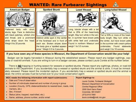 Wanted: Rare Furbearer Sightings