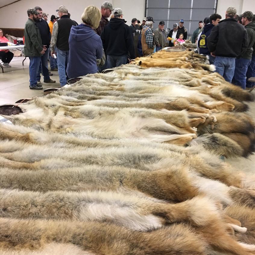 Fur Auction 2018-18