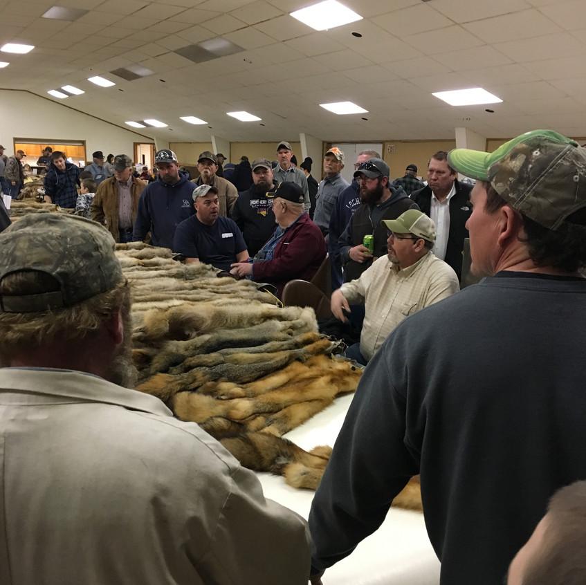 fur auction 2019-4