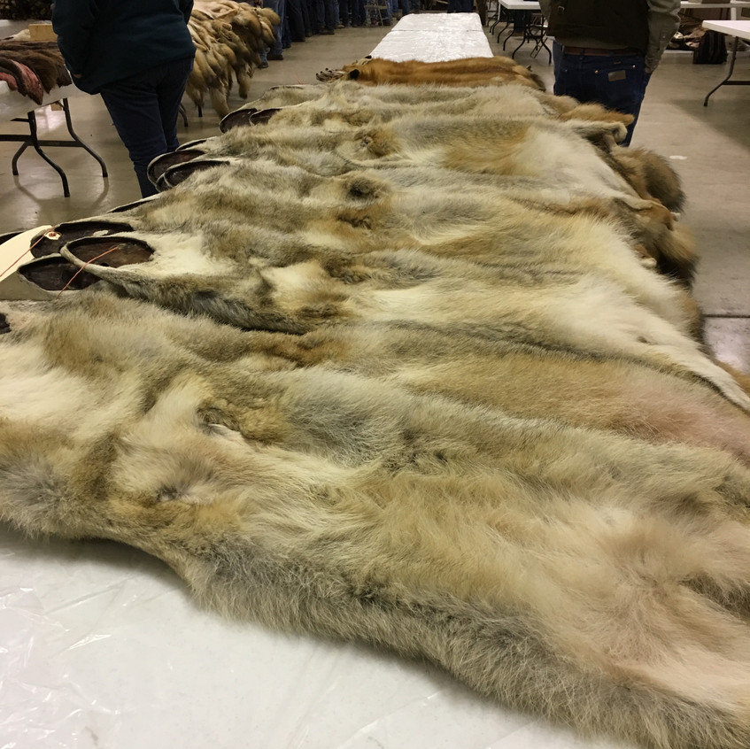 Fur Auction 2018-11