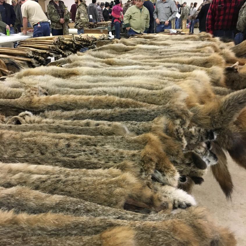 fur auction 2019-11