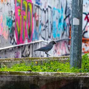Parks in Prague - Birds & Coffee in the morning, Beer in the evening!