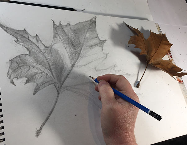 Leaf Drawing with Hand.jpg