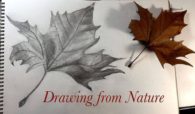 Drawing from Nature - Promo image 1.jpg