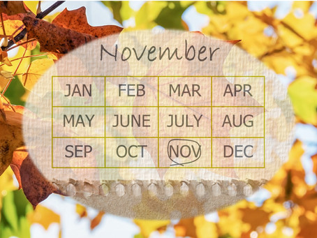 Your Garden In November