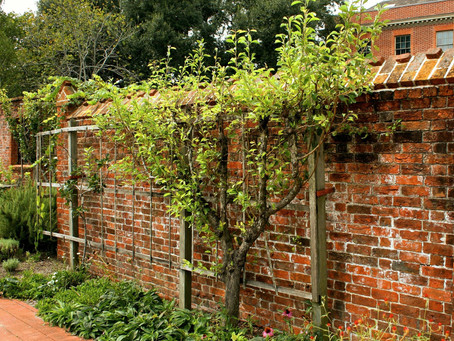How Does Pruning Shrubs Help Your Garden?