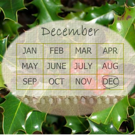 Your Garden In December