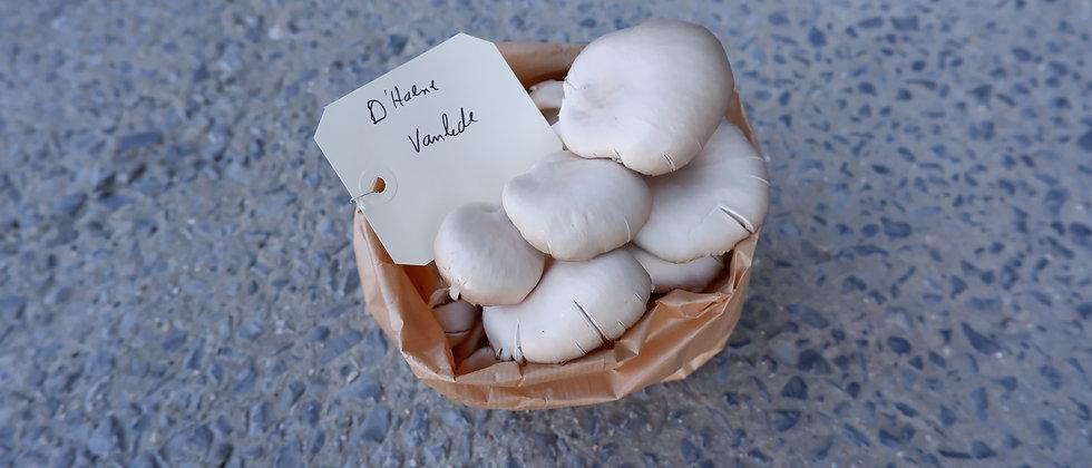"""Bio oesterzwammen """"by Frederik"""" - 250 gram"""