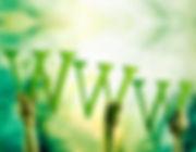 lebanon website development